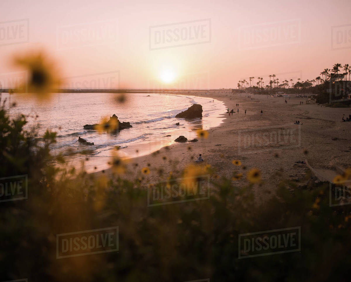 Beach and Wildflowers Royalty-free stock photo