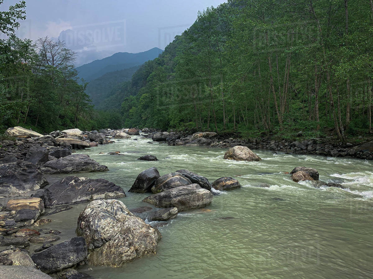 Stream flowing water in the green forest valley Royalty-free stock photo