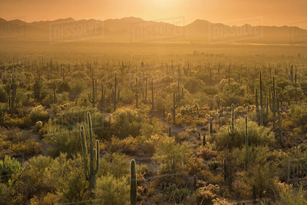 Orange backlit scene of a landscape of cactus and mountains Royalty-free stock photo