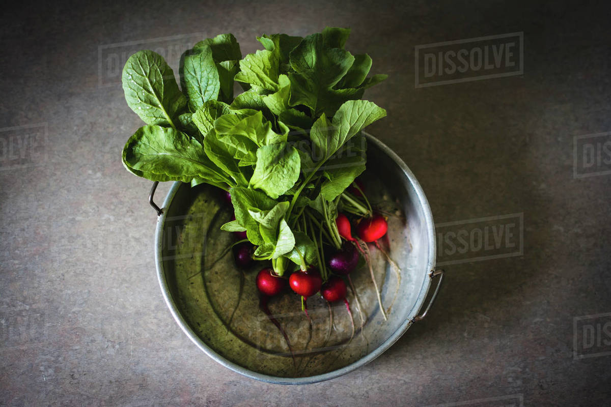 Radishes Freshly Washed in an Antique Metal Pan Royalty-free stock photo