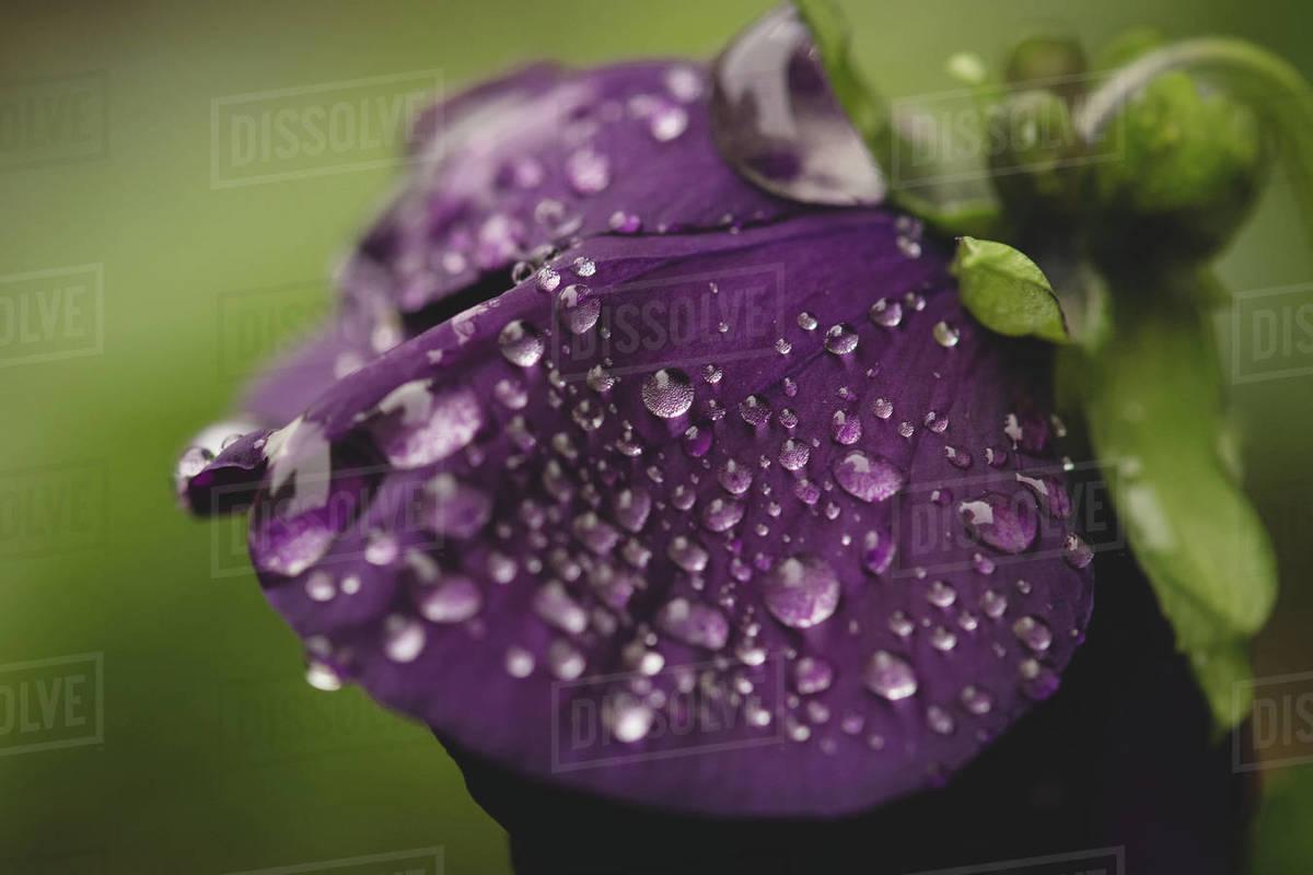 Rain Macro Royalty-free stock photo