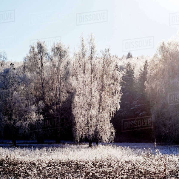 Snow covered on trees Royalty-free stock photo
