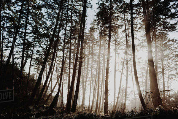 Low angle view of trees growing on field during foggy weather Royalty-free stock photo