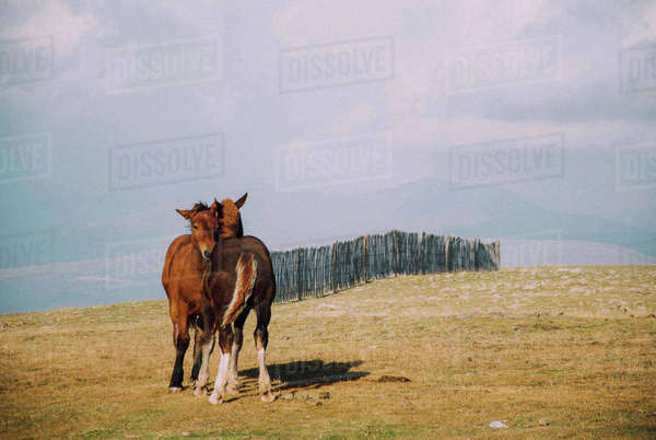 Horses standing on field against cloudy sky Royalty-free stock photo