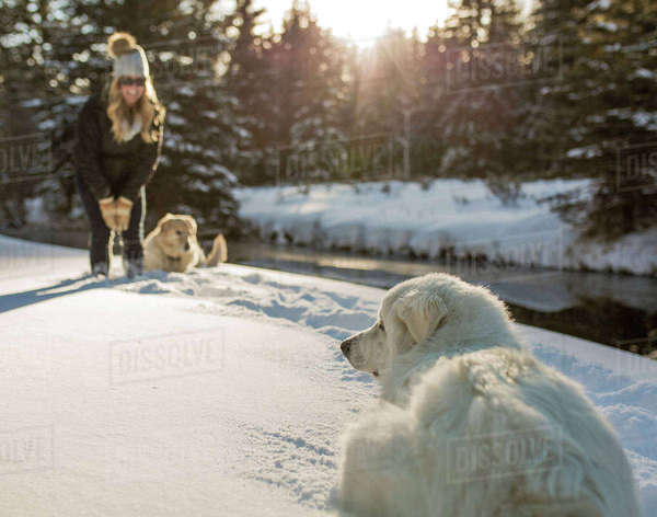 Happy woman with dogs in forest during winter Royalty-free stock photo