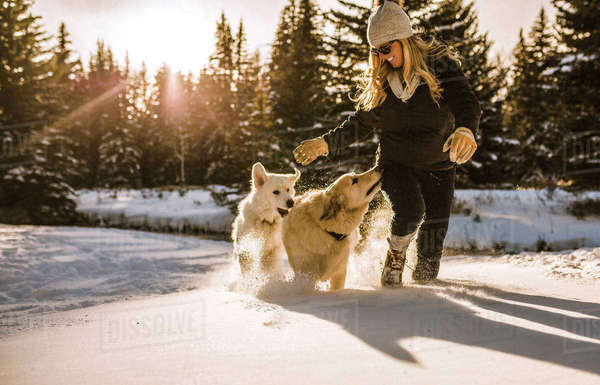 Smiling woman with dogs walking on snow covered field in forest Royalty-free stock photo