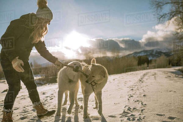 Side view of woman playing with dogs carrying stick in mouth on snow covered field Royalty-free stock photo
