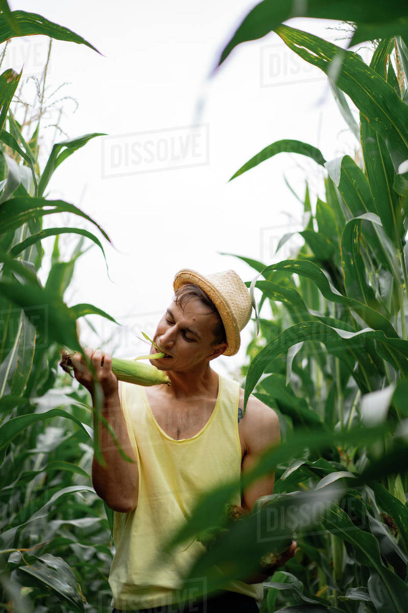 Portrait of a farm man in a hat in field eating leaves of the corn. Royalty-free stock photo