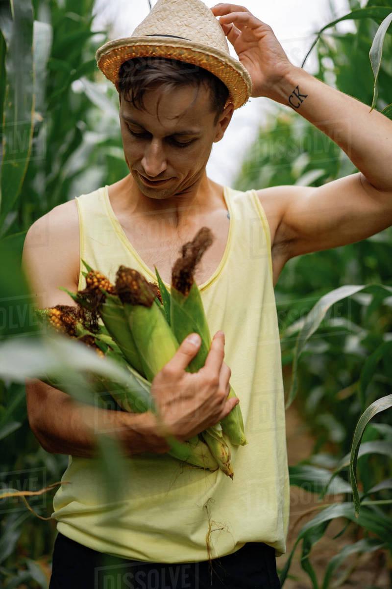 Man in a hat in a corn field. man picks up corn. Royalty-free stock photo