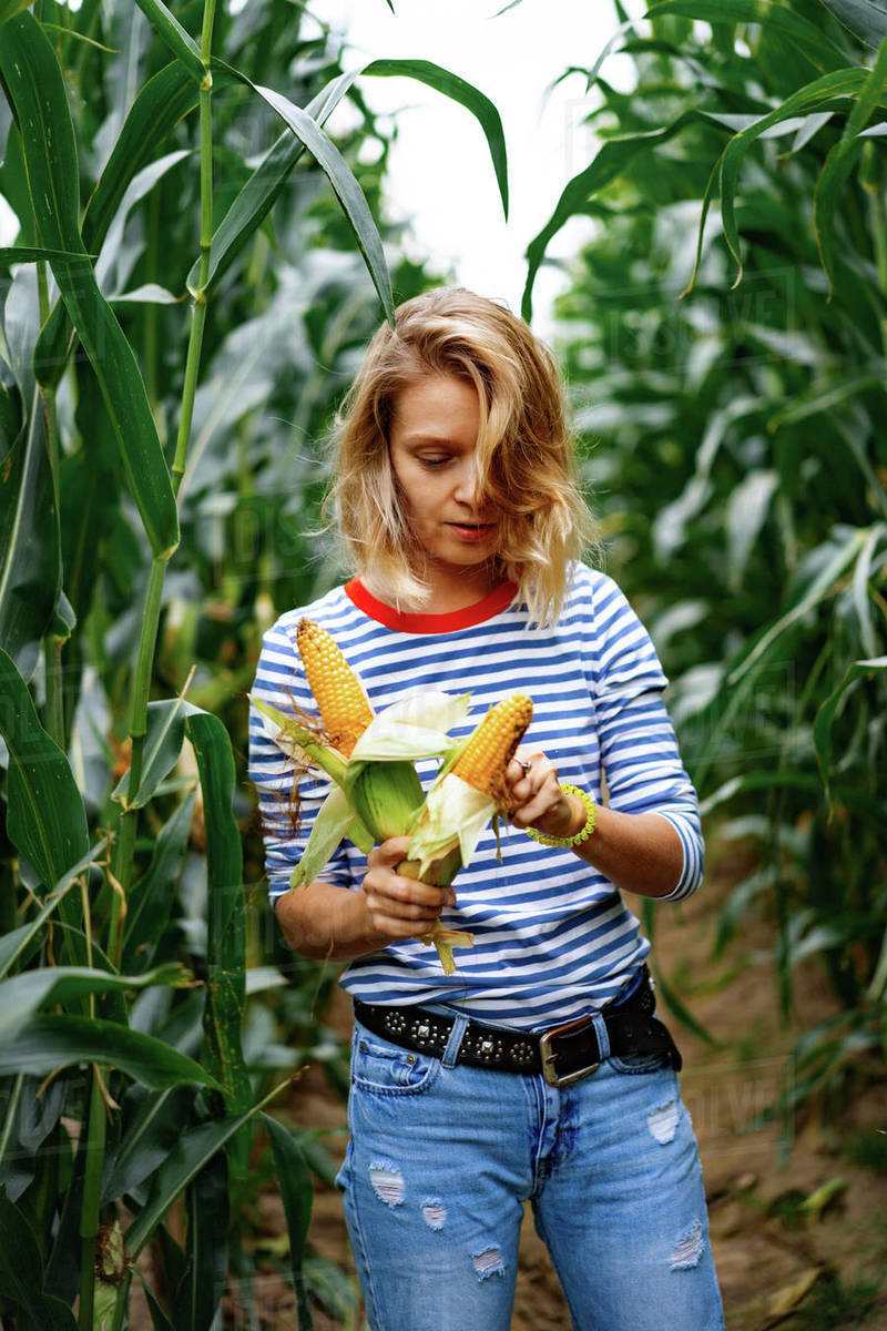 Young woman in stripped shirt in a corn field picking up the corn. Royalty-free stock photo