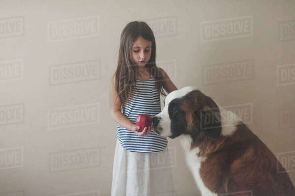 Girl holding apple while standing with Saint Bernard against wall at home Royalty-free stock photo