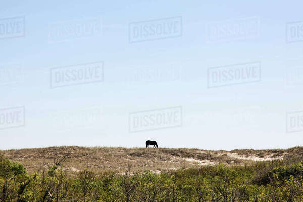 Mid distance view of horse grazing on field against clear sky during sunny day Royalty-free stock photo
