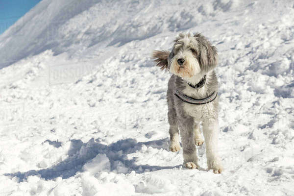 Dog standing on snow covered field during sunny day Royalty-free stock photo
