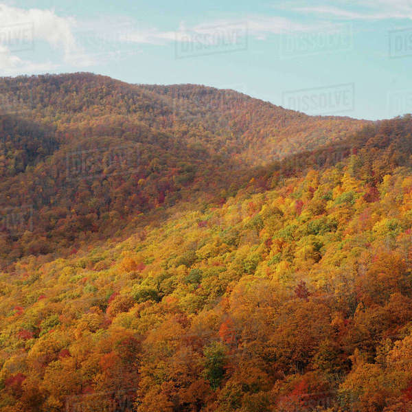 Scenic view of trees growing at Pisgah National Forest against sky Royalty-free stock photo