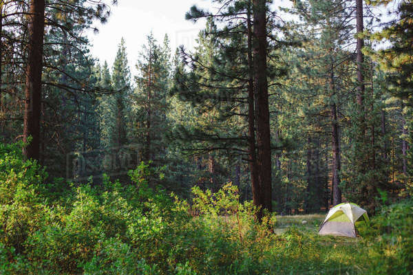Tent in forest at Grover Hot Springs State Park Royalty-free stock photo