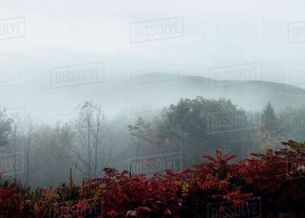 Scenic view of trees against sky during foggy weather Royalty-free stock photo