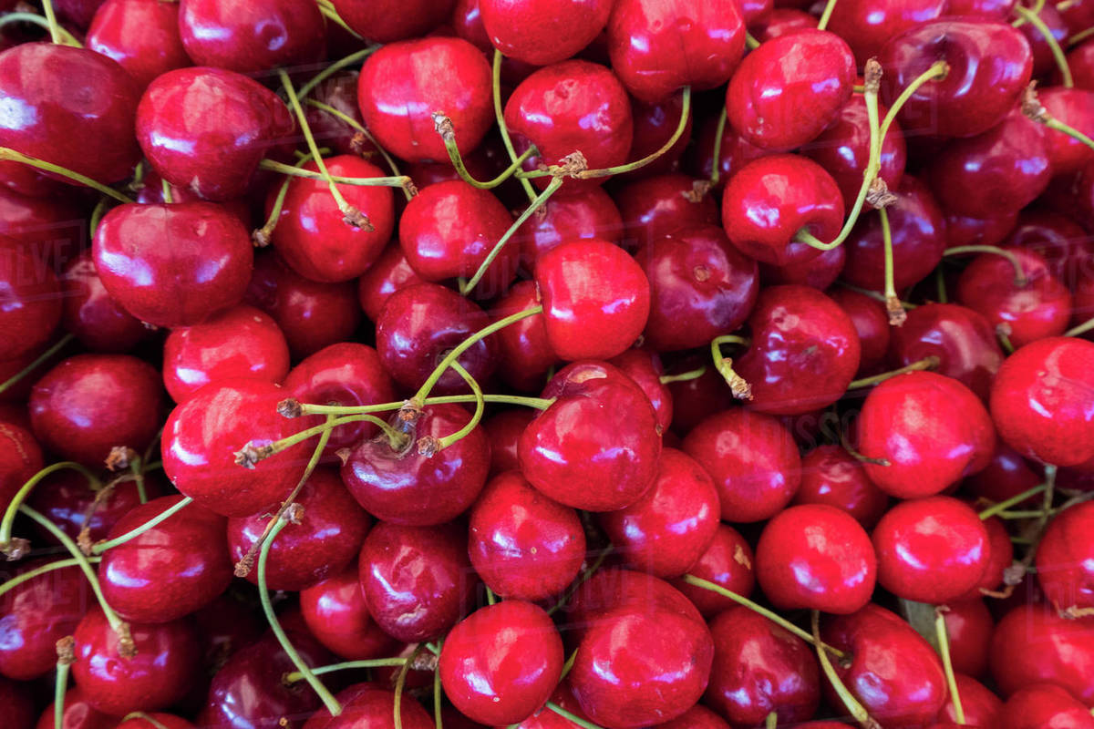 High angle view of fresh cherries for sale at market stock photo