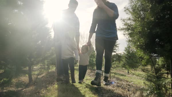 Medium shot of a family walking at a tree farm Royalty-free stock video