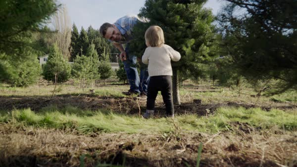 Full shot of a father playing with his child at a tree farm Royalty-free stock video