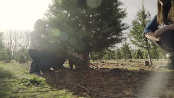 Rotating shot of a family at a tree farm Royalty-free stock video
