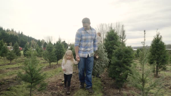 Full shot of family carrying a pine tree at a tree farm Royalty-free stock video