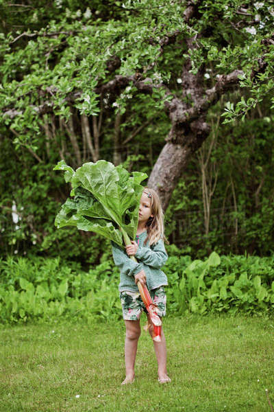 Sweden, Sodermanland, Girl (4-5) standing on grass and holding large rhubarb leaves Royalty-free stock photo