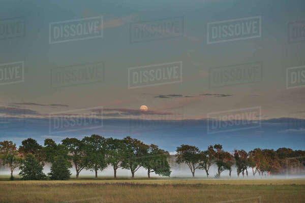 Sweden, Vastmanland, Trees in plain at dusk Royalty-free stock photo