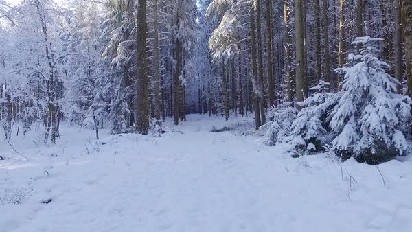 Aerial of a snowy forest track Royalty-free stock video