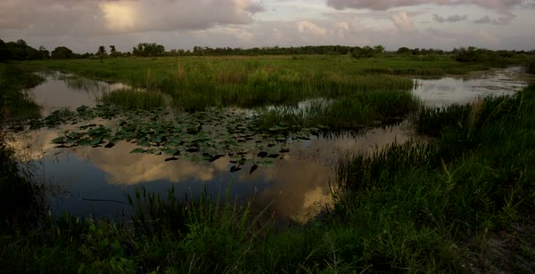 Tilt-up shot of a small lake in a marshland in Florida Royalty-free stock video
