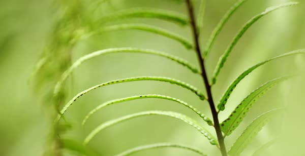 Hand-held shot of leaves of a fern Royalty-free stock video