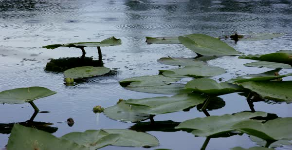Slow motion shot of rain dropping on water surface full of lily pads Royalty-free stock video