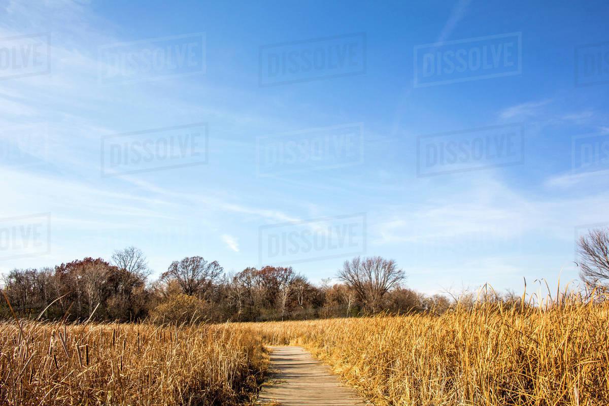 tall grass field grassland path through tall grass field under blue sky stock photo dissolve
