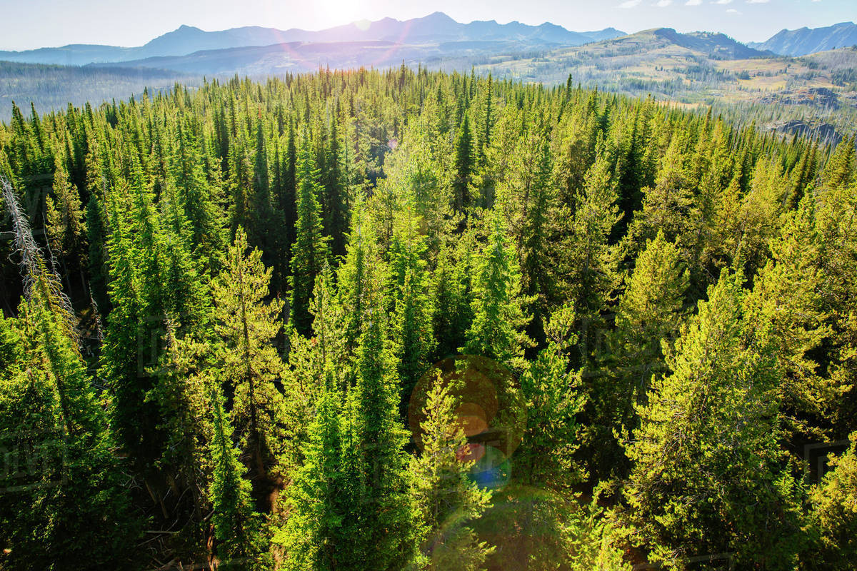 Aerial view of treetops in remote forest - Stock Photo ...
