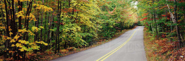Autumn leaves on trees lining road Royalty-free stock photo
