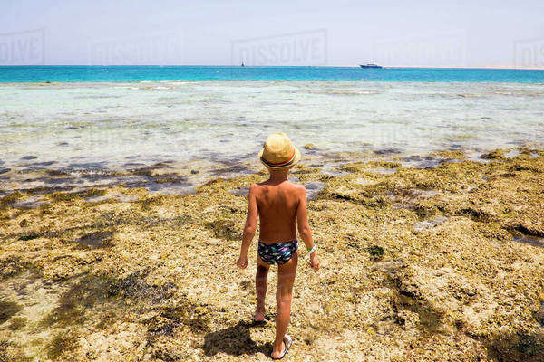 Mari boy exploring tidal pool on beach Royalty-free stock photo