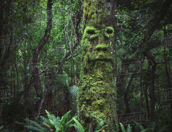 Face growing in moss on tree in lush forest Royalty-free stock photo