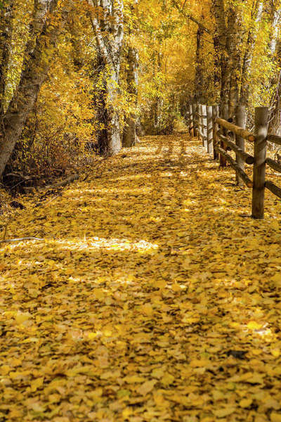 Wooden fence in autumn Royalty-free stock photo