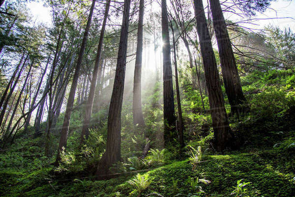 Sunbeams on forest trees Royalty-free stock photo