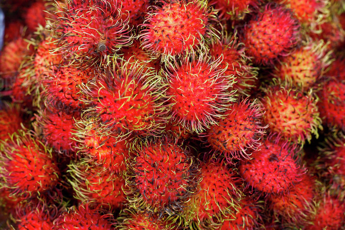 pile of red spiny fruit stock photo dissolve