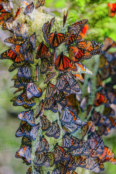 Close up of butterflies perching on plant Royalty-free stock photo