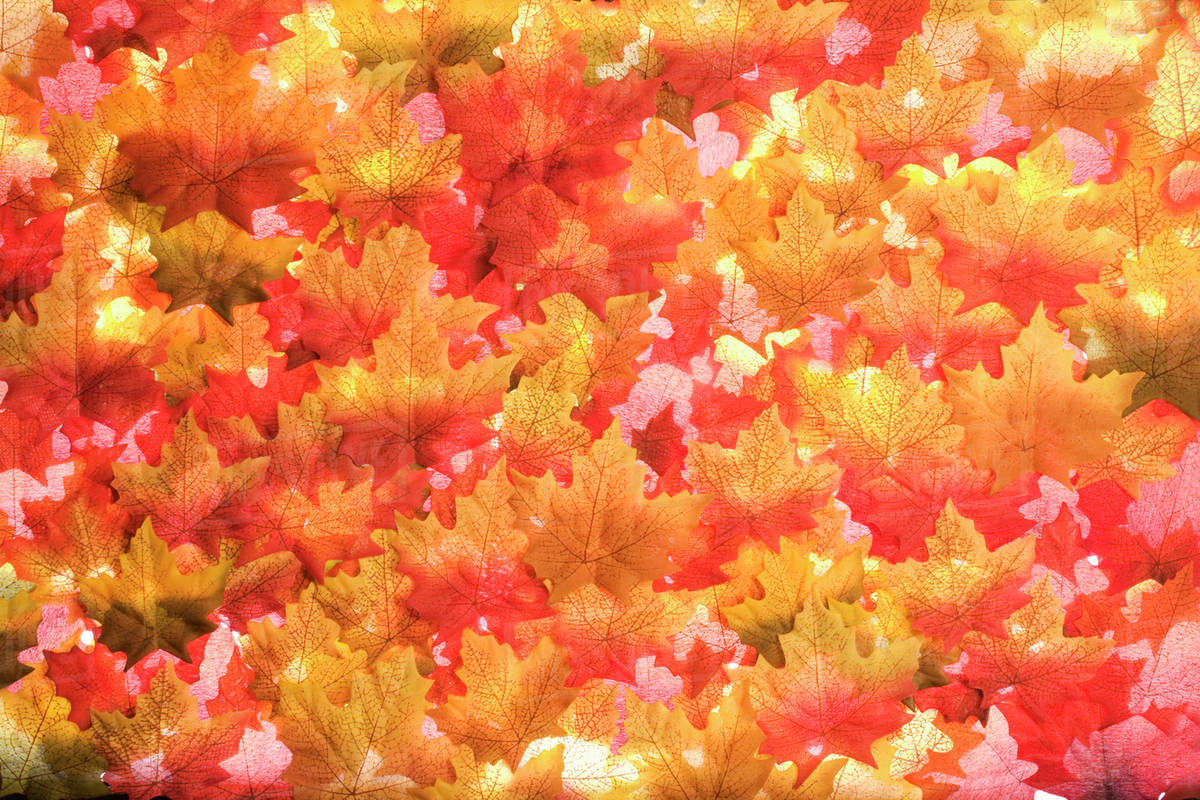 Close Up Of Pile Of Autumn Leaves Stock Photo Dissolve