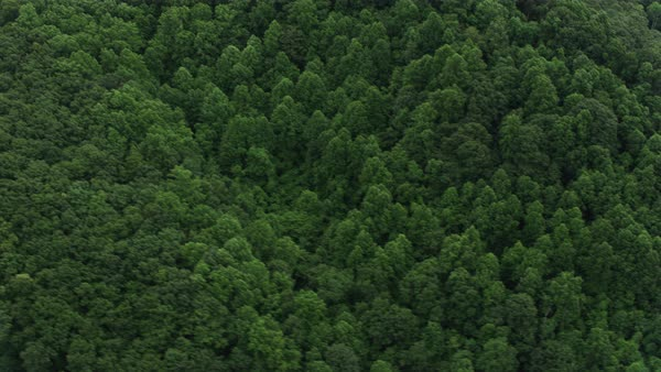 Aerial shot of a forest in Pennsylvania Rights-managed stock video