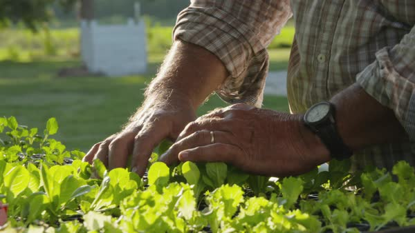 Slow motion shot of a farmer examining seedlings planted in small pots Royalty-free stock video