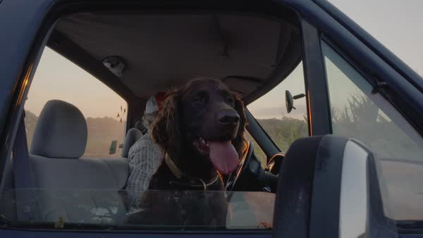 Hand-held shot of a dog sitting in a truck with its master and looking out of window Royalty-free stock video