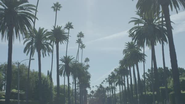Palm trees on both the sides of a road against blue sky Royalty-free stock video