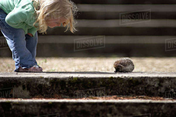 Girl (3-5) looking at hedgehog beside steps, side view, low section Royalty-free stock photo