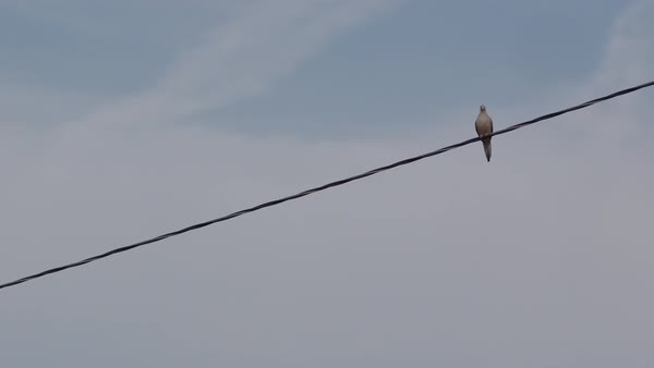 Low angle shot of a bird perching on power line and flying away, blue sky in background Royalty-free stock video