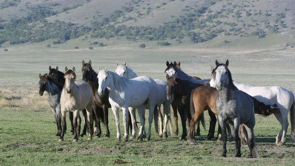 View of horses standing together as the breeze moves their hair. Royalty-free stock video