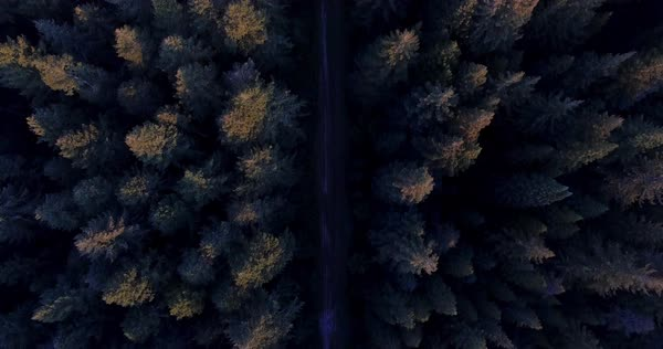 Aerial shot over Redwood Forest on a beautiul day Royalty-free stock video