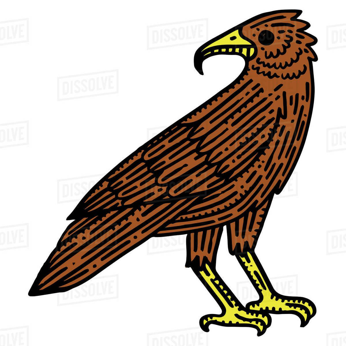 Illustration of eagle isolated on white background Royalty-free stock photo